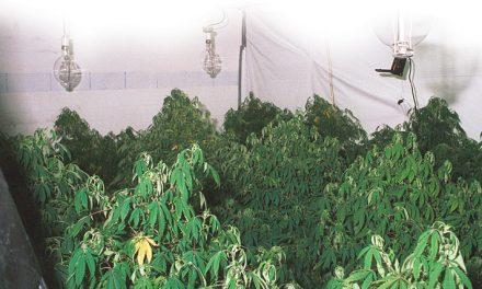 Marijuana cases down; heroin, meth on rise