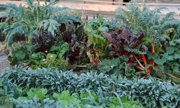 GARDEN TALK: Diversity critical for gardeners