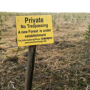 Gov't restarts forest licence review