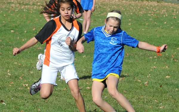 Wildcats, Bears and Hawks take elementary soccer titles